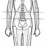 Ideal anterior posture