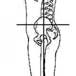 Ideal posture from the left side